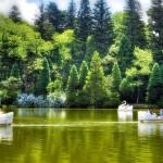 Fuja da Rotina:  Corra para o Lago Negro