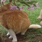 Blog da Farofa – conhecendo uma criatura muito estranha