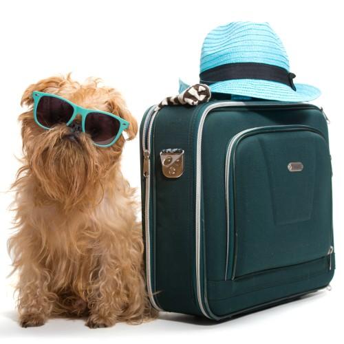 Cão + mala de viagem