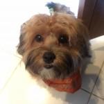 Blog da Farofa – por mais cãezinhos educados e felizes