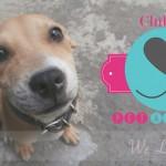 Clube da AUlice – uma novidade para quem ama Pets