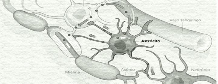 Pesquisa brasileira com astrócitos lança novos horizontes possíveis para o autismo