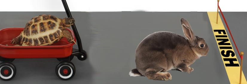 O coelho e a tartaruga – o que aconteceu depois da fatídica corrida…