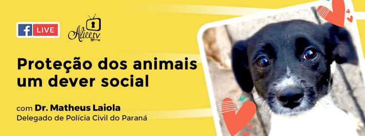 Proteção dos animais: um dever social