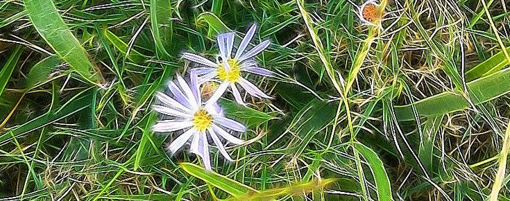 As flores e as ervas daninhas